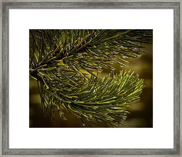 Rocky Mountain Rain Framed Print by Patrick  Flynn