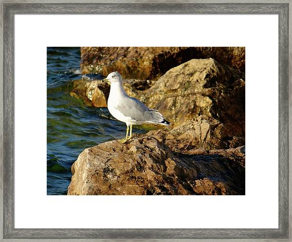 Rocky Waters Framed Print
