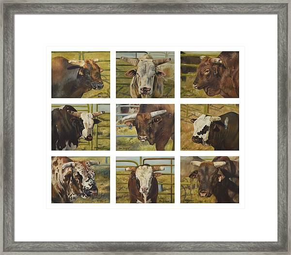 Rodeo Royalty Framed Print
