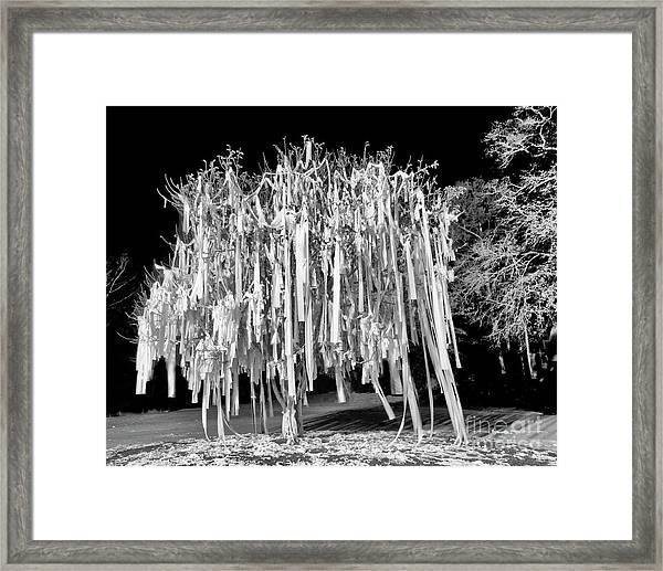 Rolled Tree Blk N White Framed Print