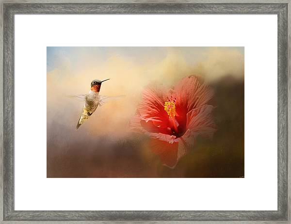 Romancing The Hibiscus Framed Print