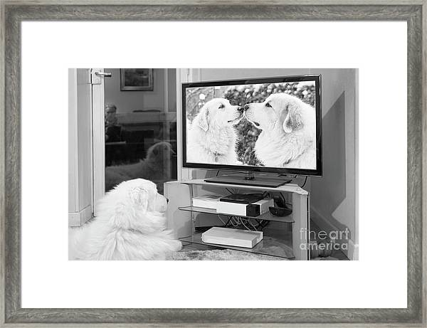 Romantic Dogs Framed Print