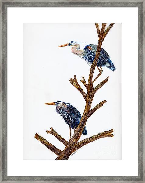 Rookery Framed Print