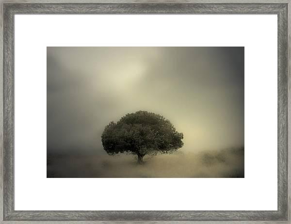 Room To Grow Framed Print