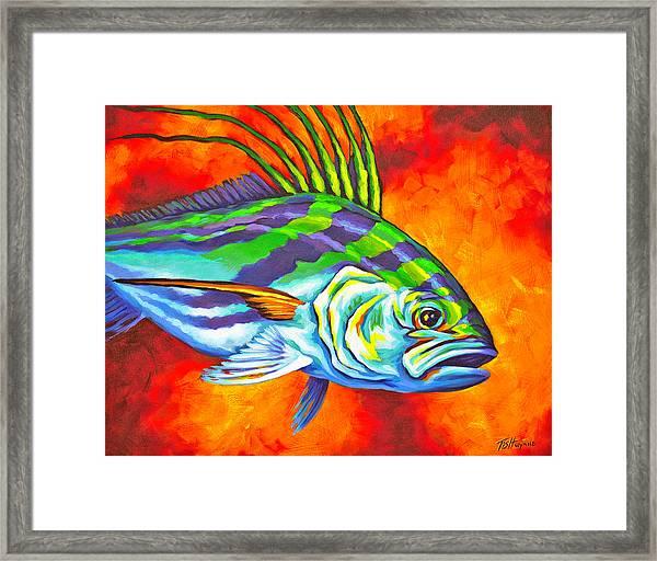 Rooster Fish Framed Print
