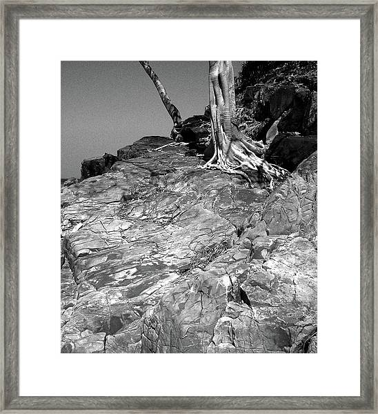 Rootflow Framed Print