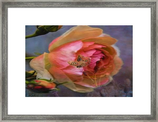 Rose Buttefly Framed Print