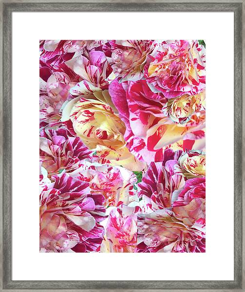Rose Collage Framed Print