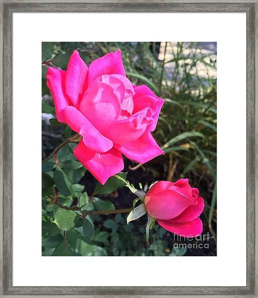 Rose Duet Framed Print