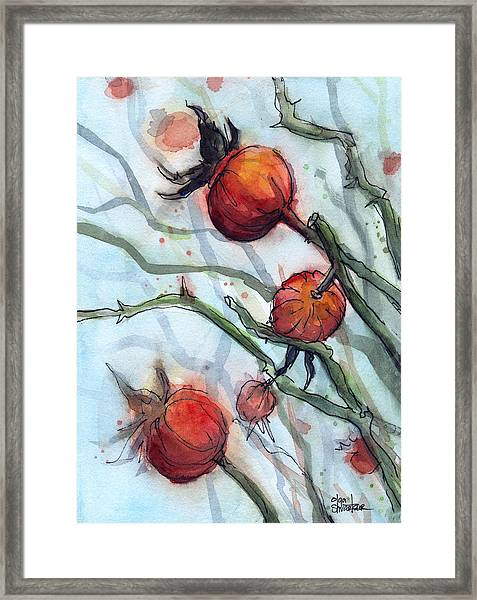 Rose Hips Abstract  Framed Print
