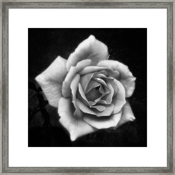 Rose In Mono. #flower #flowers Framed Print
