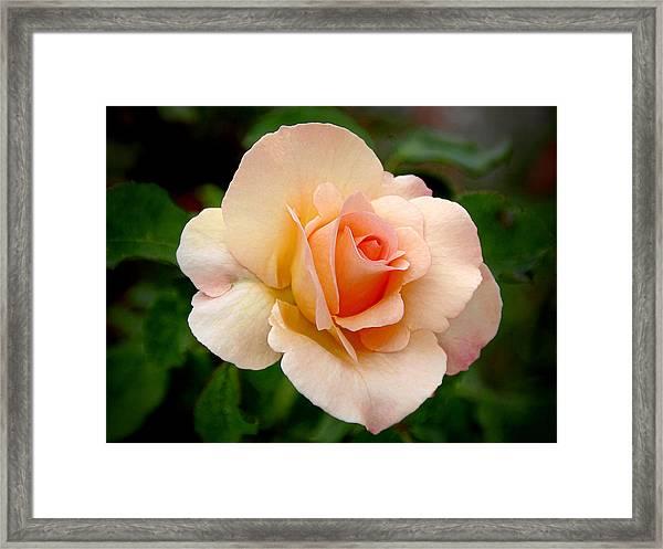 Rose Is A Rose Is A Rose Framed Print
