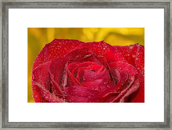 Rose N Gold Framed Print