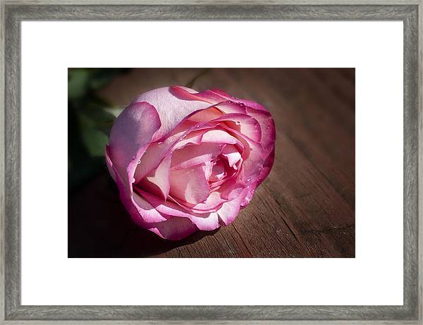 Rose On Wood Framed Print