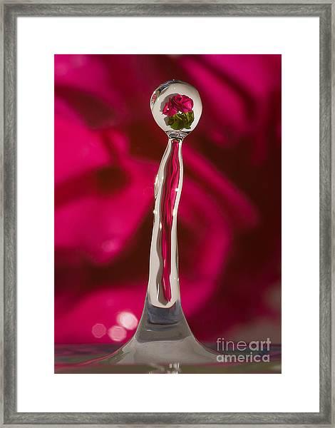 Rose Relection Framed Print