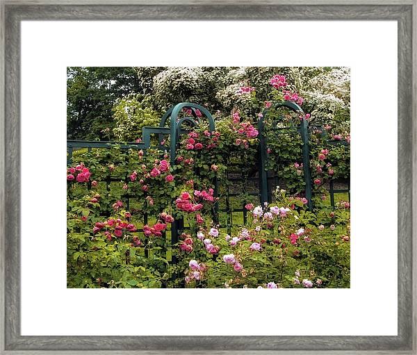 Rose Trellis Framed Print