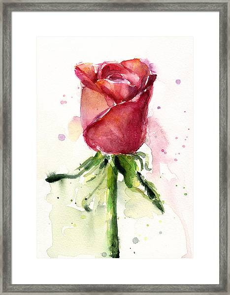 Rose Watercolor Framed Print