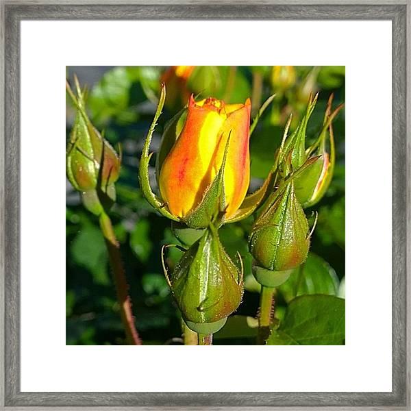 #rosebuds Detail. Love The Mix Of Framed Print
