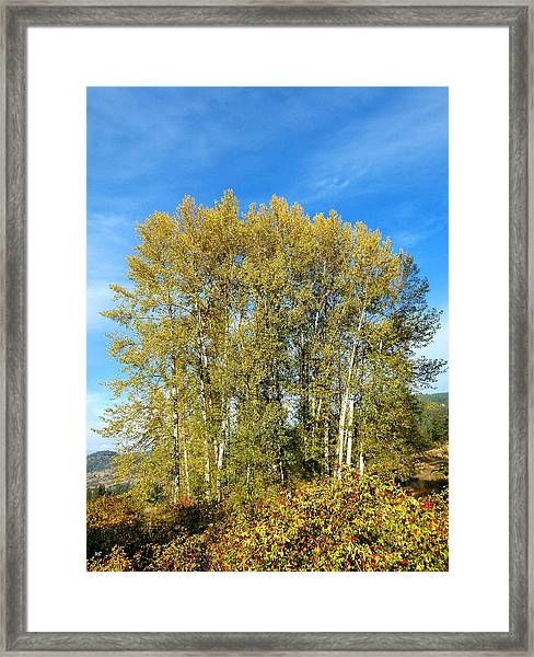 Rosehips And Cottonwoods Framed Print