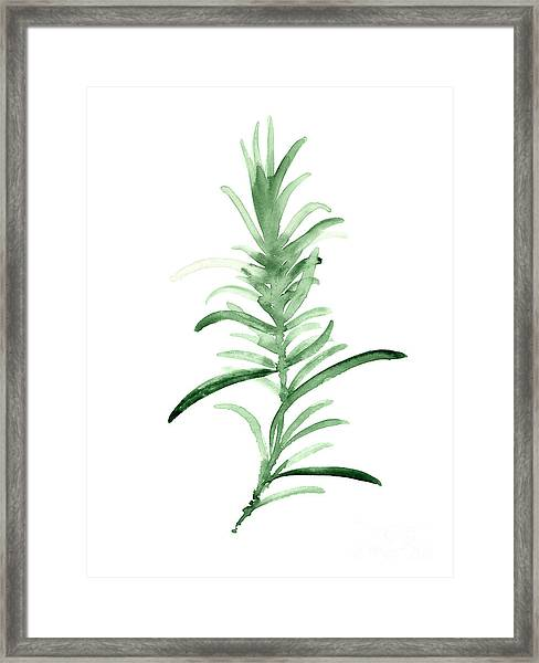 Rosemary Green Watercolor Foodart Framed Print