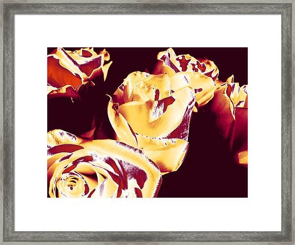 Roses #1 Framed Print