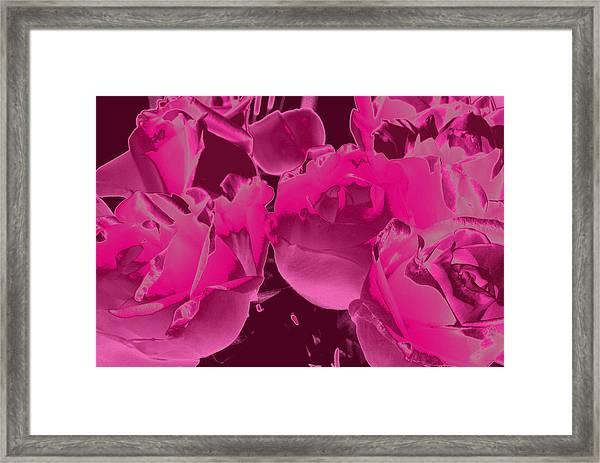 Roses #5 Framed Print