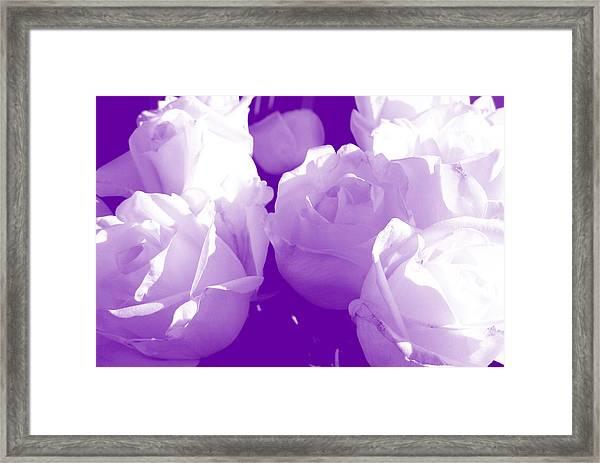 Roses #7 Framed Print