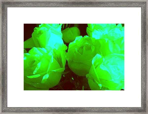 Roses #8 Framed Print