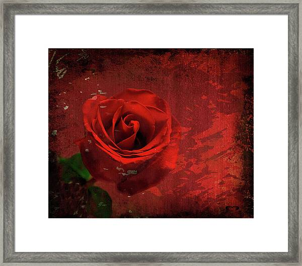 Roses Are Still Red Framed Print