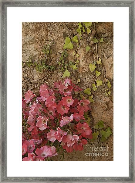 Roses In Spain Framed Print