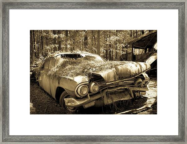 Rotting Classic Framed Print