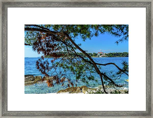 Rovinj Old Town Accross The Adriatic Through The Trees Framed Print