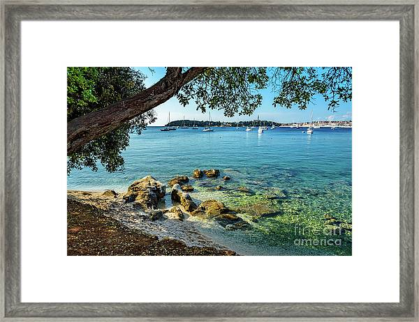 Rovinj Old Town, Harbor And Sailboats Accross The Adriatic Through The Trees Framed Print