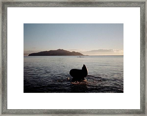 Rowing Off Sausalito, Ca Framed Print
