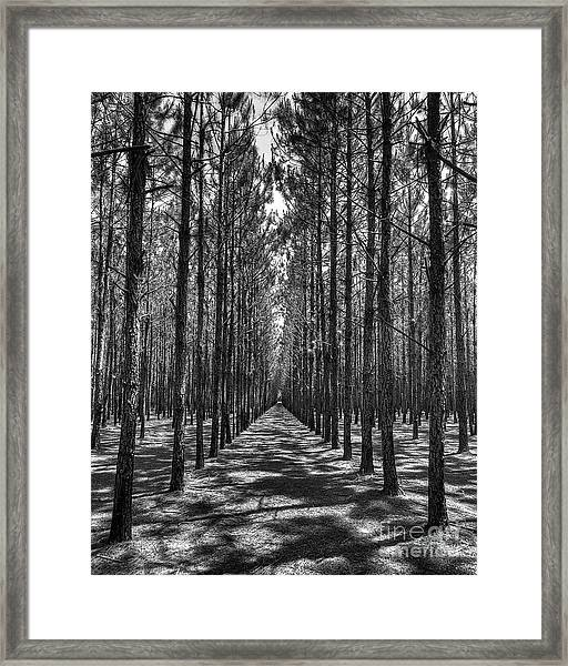 Rows Of Pines Vertical Framed Print