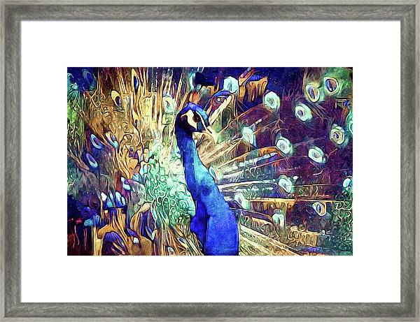 Royal Peacock Framed Print