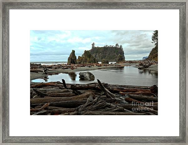 Ruby Beach Driftwood Framed Print