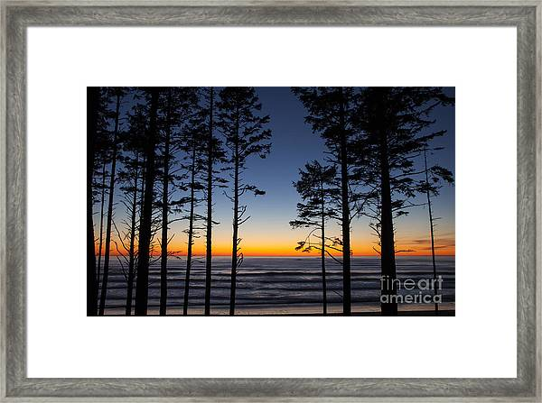 Ruby Beach Trees #4 Framed Print