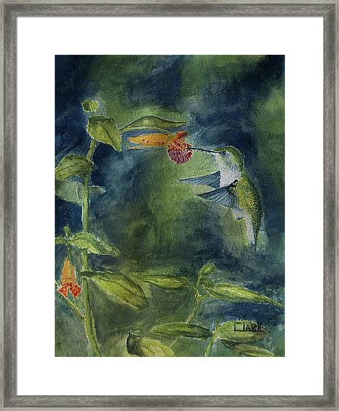 Rubythroated Hummingbird Framed Print