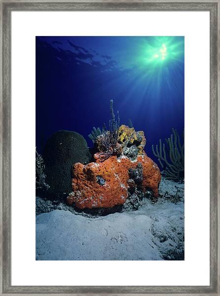 Rum Cay Rainbow Framed Print