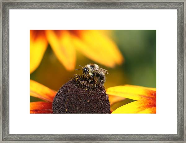Rumble Bee Framed Print