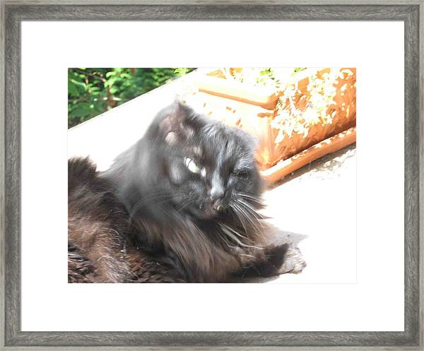 Rumbles Shakes Her Head Framed Print