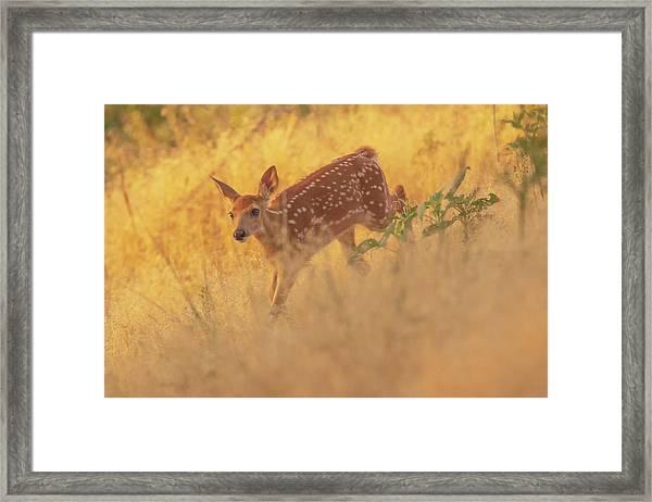 Framed Print featuring the photograph Running In Sunlight by John De Bord