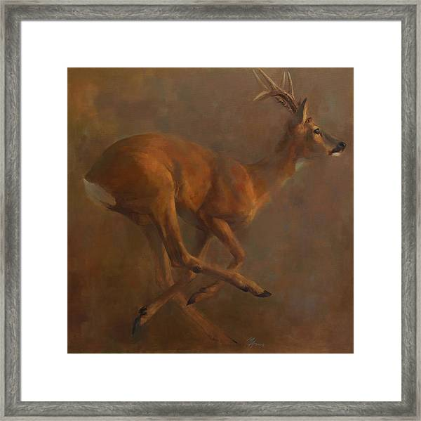 Running Roe Framed Print