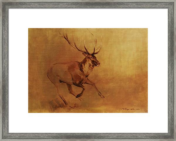 Running Stag Framed Print