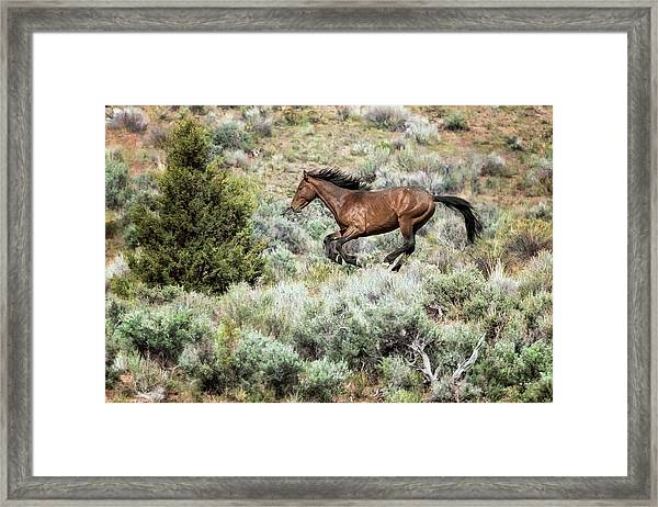 Running Through Sage Framed Print