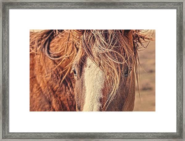 Rustic Eyes Framed Print