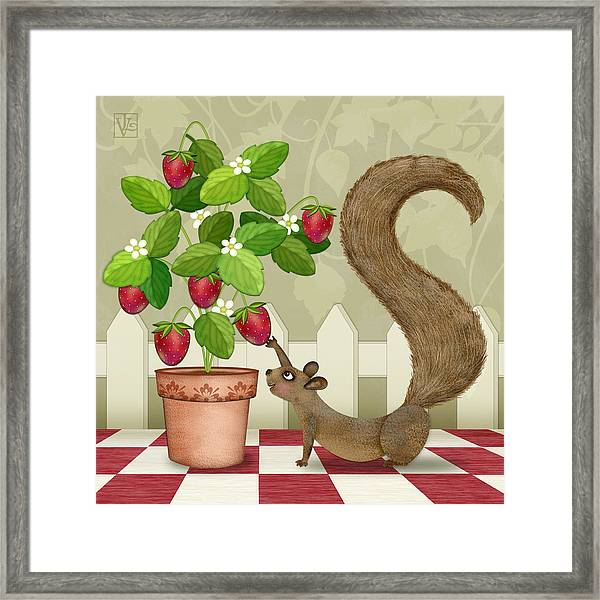 S Is For Squirrel Framed Print