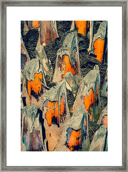 Sabal Palm Framed Print