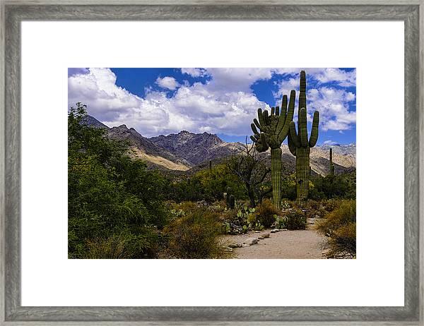 Sabino Canyon No4 Framed Print